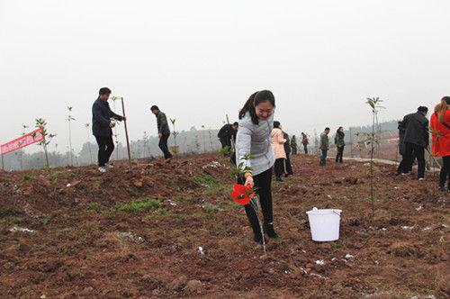 正在给树苗浇水。宋成均摄影