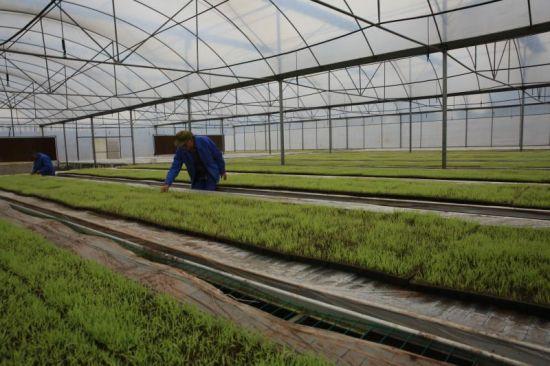 育苗施用有机肥的方法