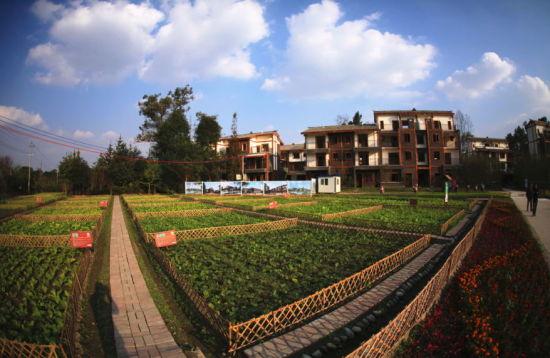 温江最美花园乡村(院落)。钟欣 摄