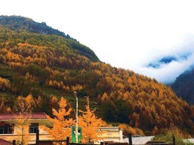 卧龙镇后山的彩林