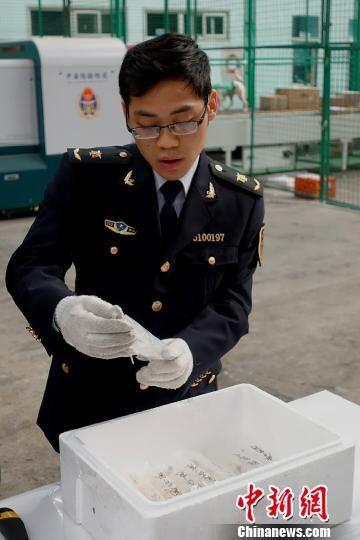 四川检验检疫局陆运办截获的活体虾苗。 钟欣 摄
