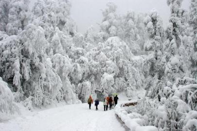 游客在峨眉山雪景中漫步。 高路川 摄