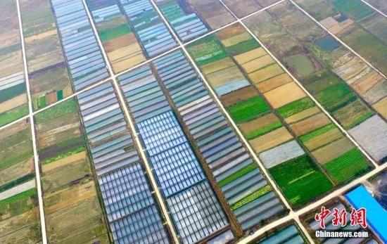 资料图:江西省新余市渝水区界水乡有机蔬菜种植园春意盎然,这里是一个有机蔬菜特色小镇。 赵春亮 摄