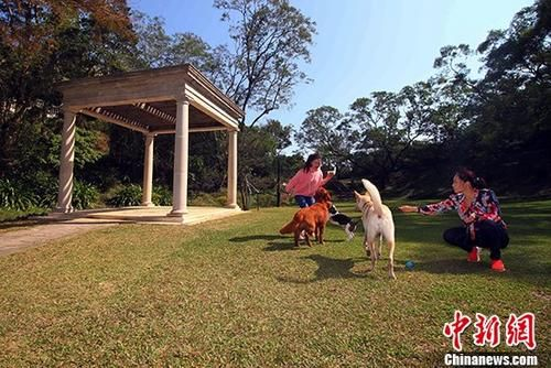 市民和宠物在草地上嬉戏。 中新社记者 李志华 摄