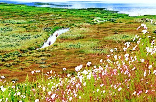 """泸沽湖有万亩草海湿地是镶嵌在泸沽湖东面的翡翠。37种水生植物,42种珍禽异鸟,再加之11种鱼、虾、贝、螺、蛙,构成罕见的生物大观园。草海内芦苇如墙,水路错综,红白衣裙的摩梭姑娘划着猪槽船出没其中,悠扬的""""啊哈吧啦""""民歌在水草丛中回荡。"""