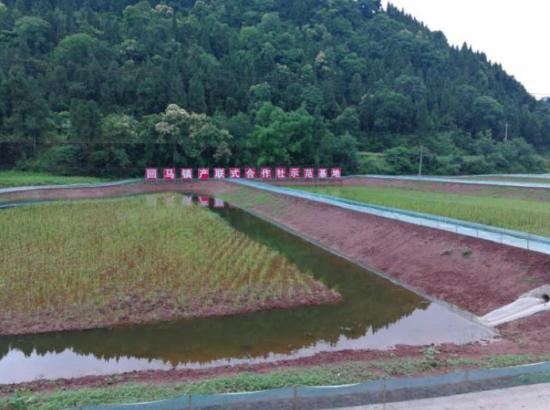 大英县产联式合作社稻虾养殖基地
