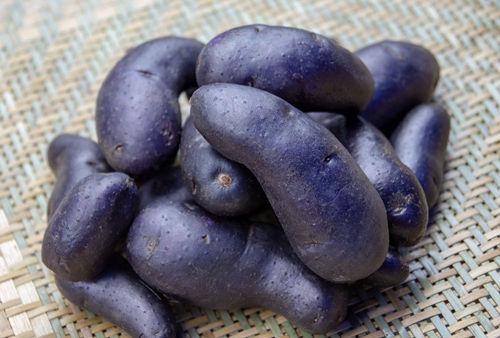 """高原""""黑土豆""""。"""