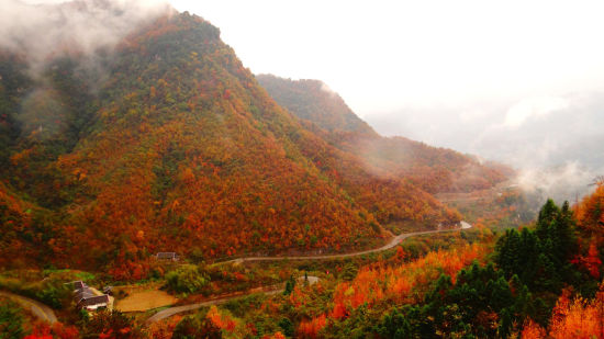 图为旺苍迷人秋景。杨志诚摄