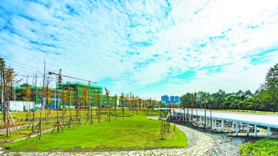 经过改造,桤木河成为观赏性与参与性相结合的特色滨水生态绿廊