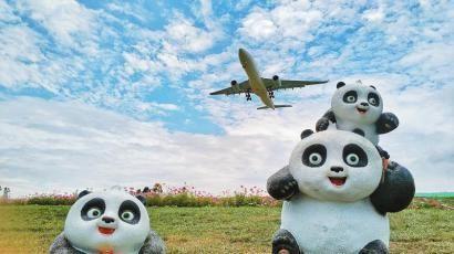 """双流区空港花田里的""""大熊猫一家""""。"""