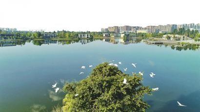 双流凤翔湖公园一景。