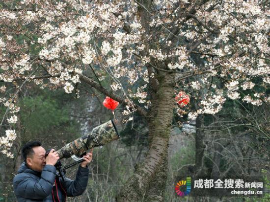 摄影爱好者在樱桃山采风