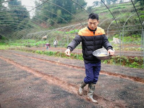 """种下""""美人椒"""",这一季的收入不用愁。江安县委宣传部供图。"""