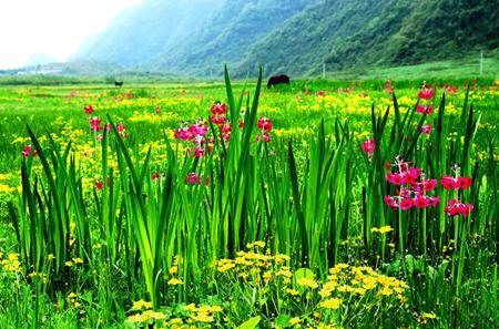 大瓦山国家湿地公园