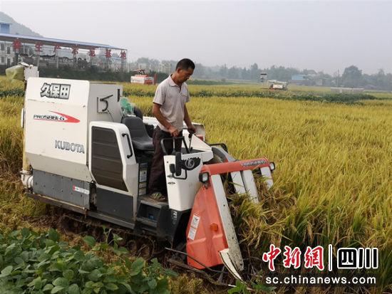 农民用收割机收割水稻。</p><p>吕婕 摄