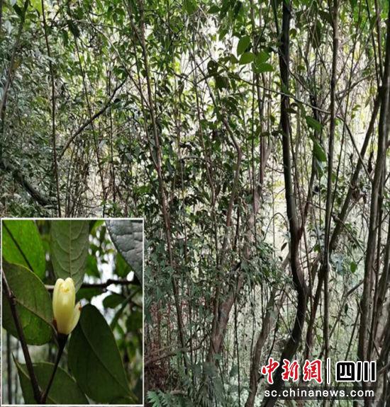 http://www.chnbk.com/wenhuayichan/9004.html