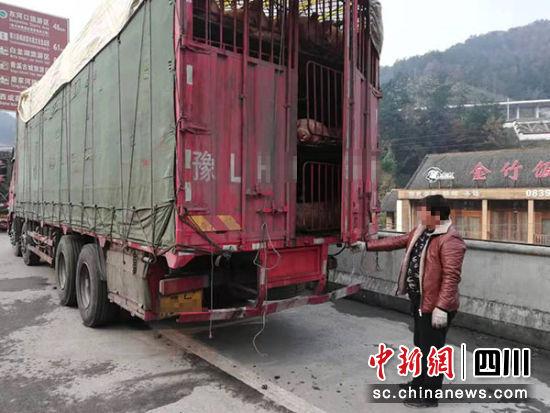 被查获的运载生猪车辆及驾驶员。
