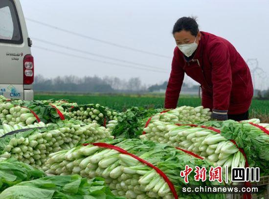 崇州為菜農搭建防疫時期蔬菜銷售