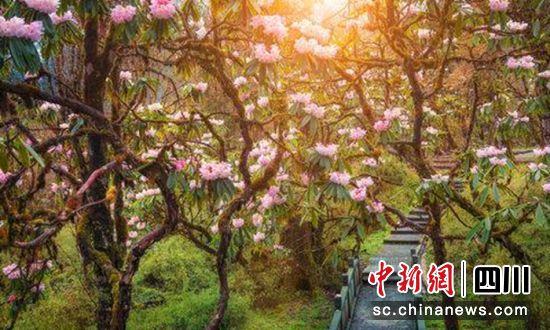 http://www.edaojz.cn/youxijingji/517114.html
