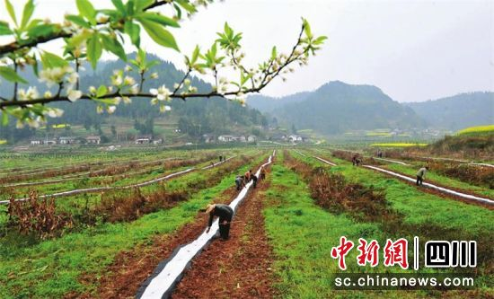 村民在脱贫奔康产业园除草施肥。