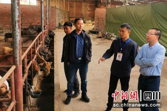 """广元警官亢国军在开江县曹大均养牛场选购""""扶贫牛""""。刘怀英 摄"""