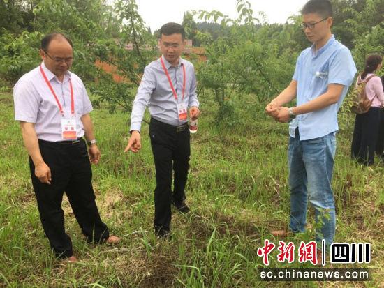 四川省专家服务团刘彤教授正在现场提建议。综欣 摄