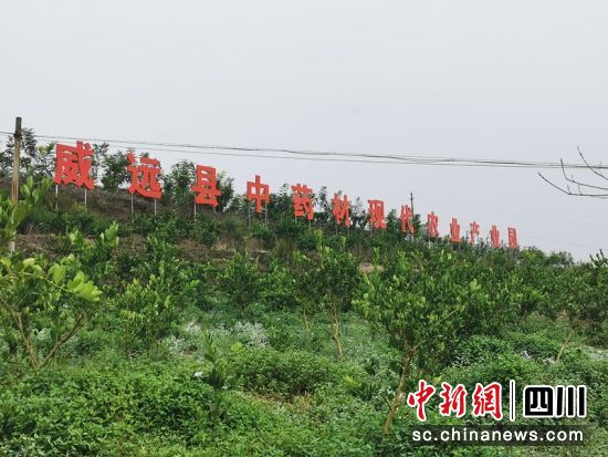 威远县中药材现代农业产业园。威远县委宣传部供图