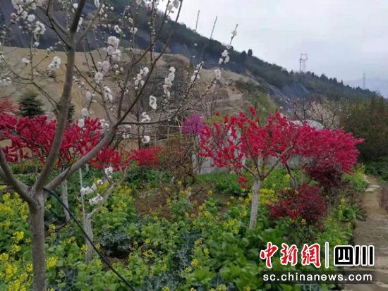 矿区环境修复。 北川县自然资源局供图