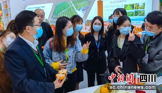 """200元一个的柑橘新品种""""明日行""""吸引参观者。记者刘忠俊摄"""