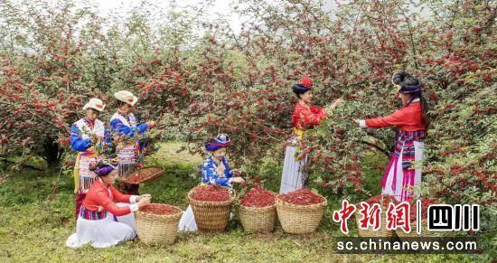 盐源县首届花椒节将于18日开幕。邹森 摄